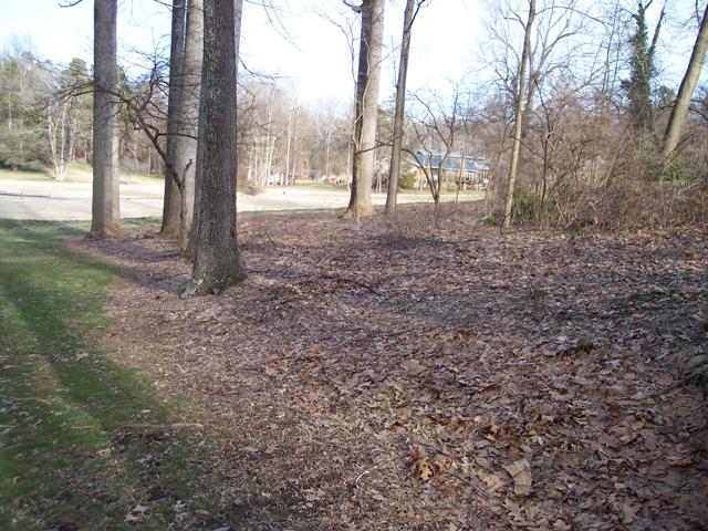 side area for Hostas