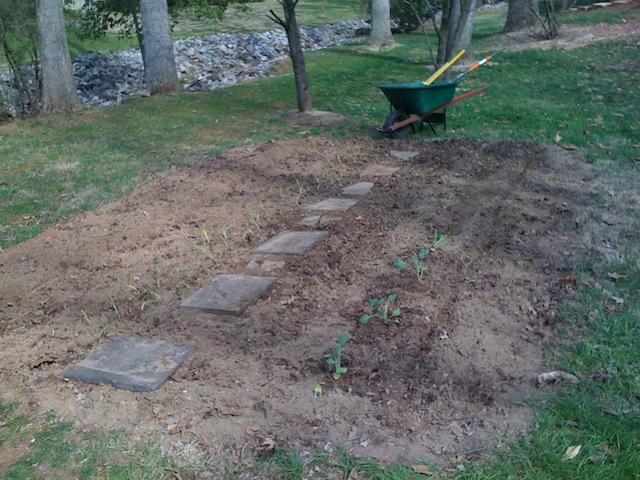 Garden 3/14/2011