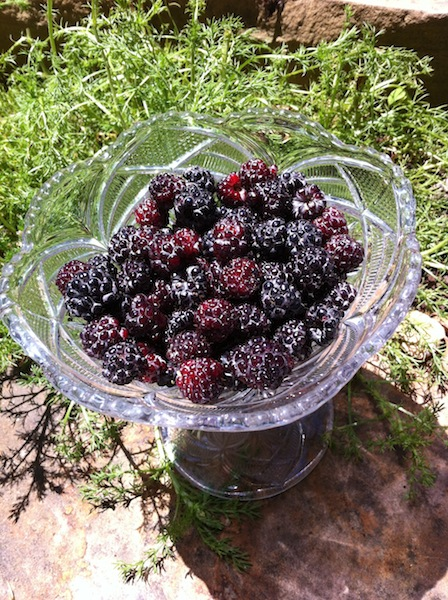 Black Raspberries - First Harvest of the Season