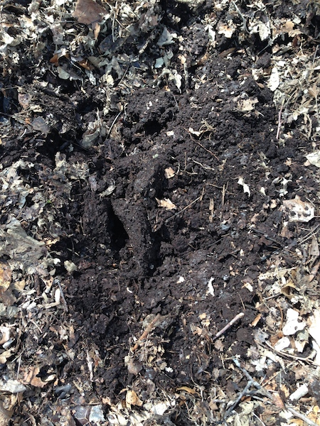 The Best Soil You Never Have to Buy