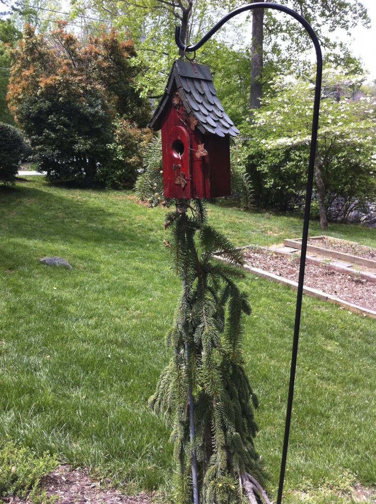 Keep Snakes Out of Your Bird House!