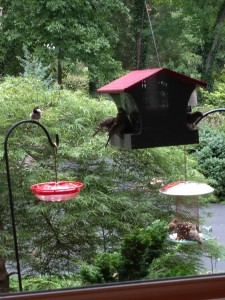 How to Keep Squirrels out of Your Birdfeeders