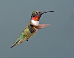 How to Get Hummingbirds in Your Yard!
