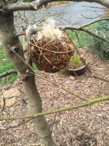 Bird Nesting Time!